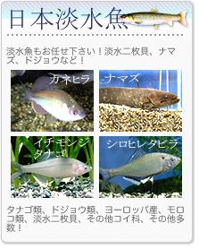 日本淡水魚
