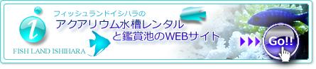 アクアリウム水槽レンタルと鑑賞池のWEBサイトへ今すぐアクセス!!