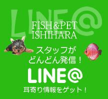 イシハラのLINE@
