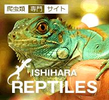 イシハラ爬虫類専門サイト