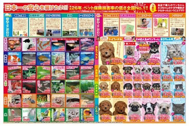 1704_fishandpetishihara_yoko_D4_B_OL