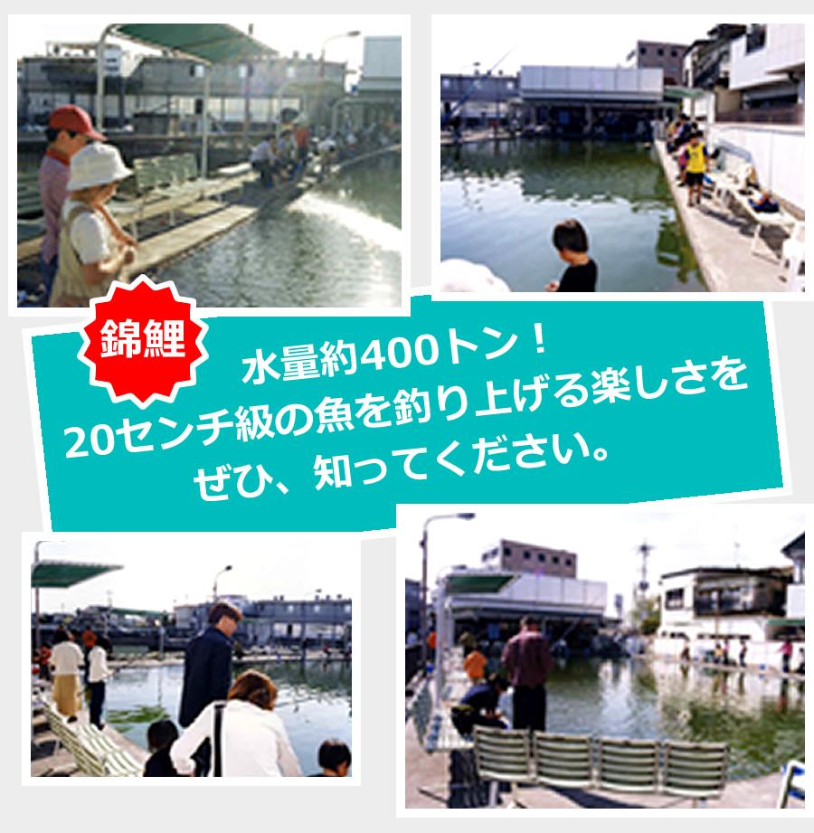 山梨 錦鯉釣り堀 水量約400トン!20センチ級の魚を釣り上げる楽しさをぜひ、知ってください。