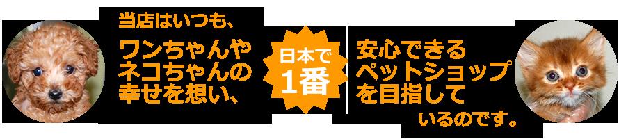 当店はいつも、ワンちゃんやネコちゃんの幸せを想い、日本で1番安心できるペットショップを目指しているのです。